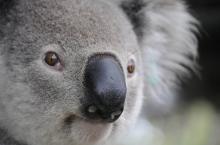 以太坊成为央行首选?澳大利亚央行开始在以太坊网络上测试央行数字货币