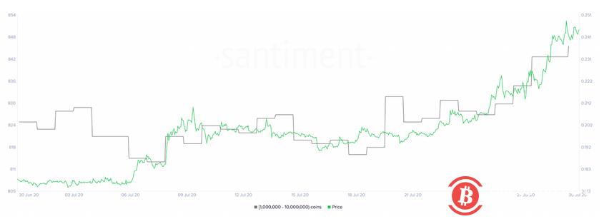 XRP过去两周上涨超30%,新增30只持币巨鲸